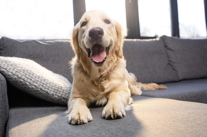 8 Materials That Make the Best Furniture for Dogs – Diesel Plus